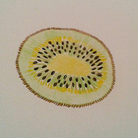 Illustration au crayon de la barbichette représentant une tranche de fruit kiwi